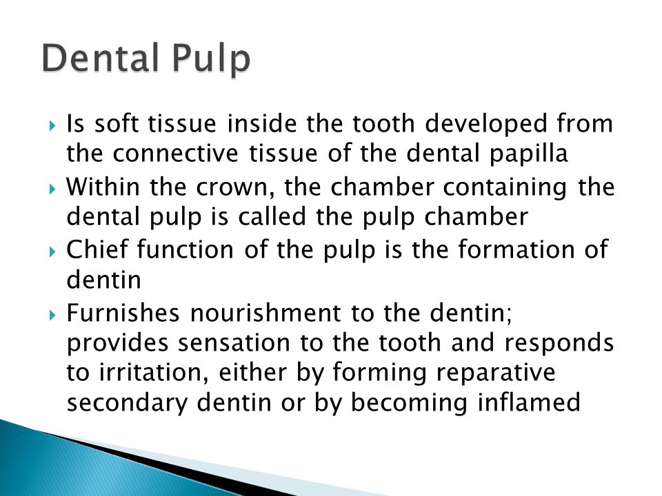  Is soft tissue inside the tooth developed from the connective tissue of the dental papilla  Within the crown, the chamber containing the dental pul