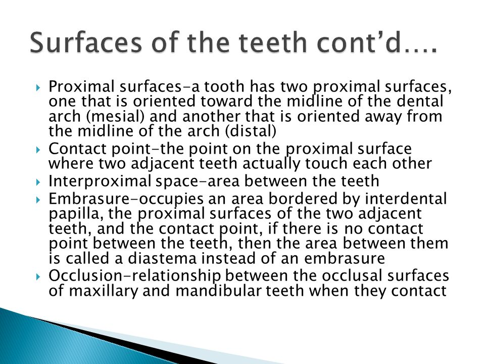  Proximal surfaces-a tooth has two proximal surfaces, one that is oriented toward the midline of the dental arch (mesial) and another that is oriente