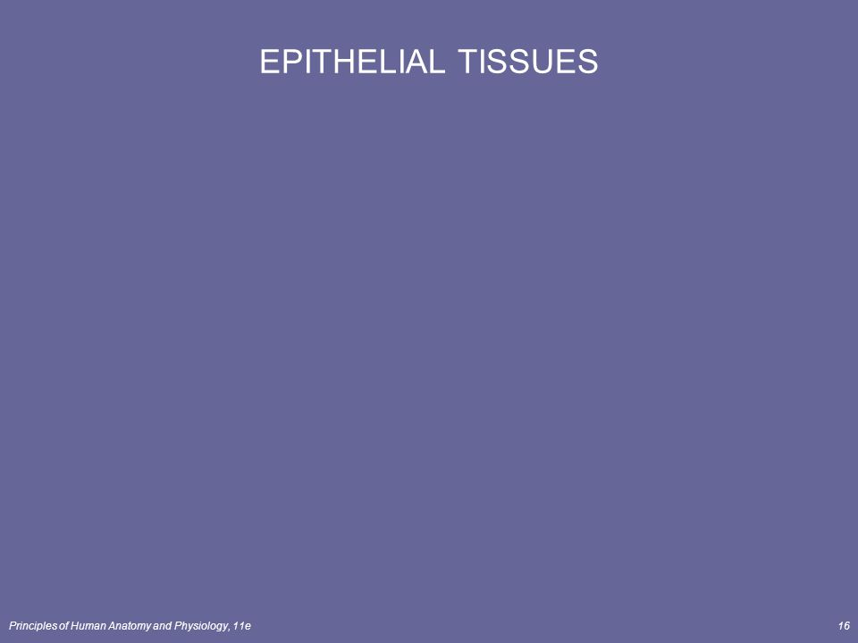Principles of Human Anatomy and Physiology, 11e16 EPITHELIAL TISSUES