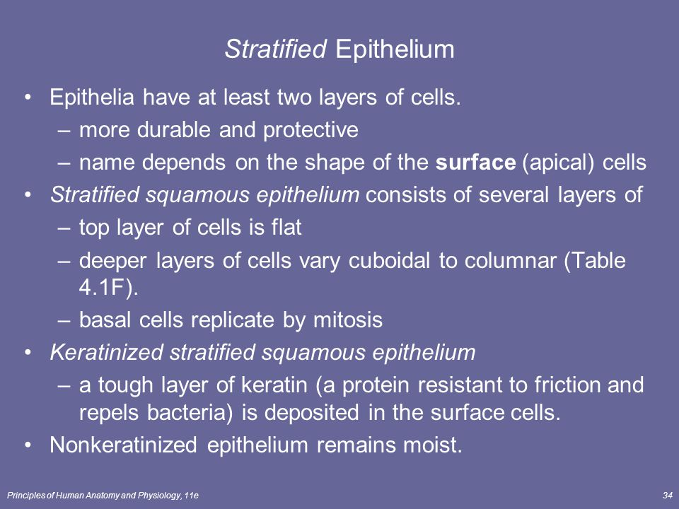 Principles of Human Anatomy and Physiology, 11e34 Stratified Epithelium Epithelia have at least two layers of cells. –more durable and protective –nam