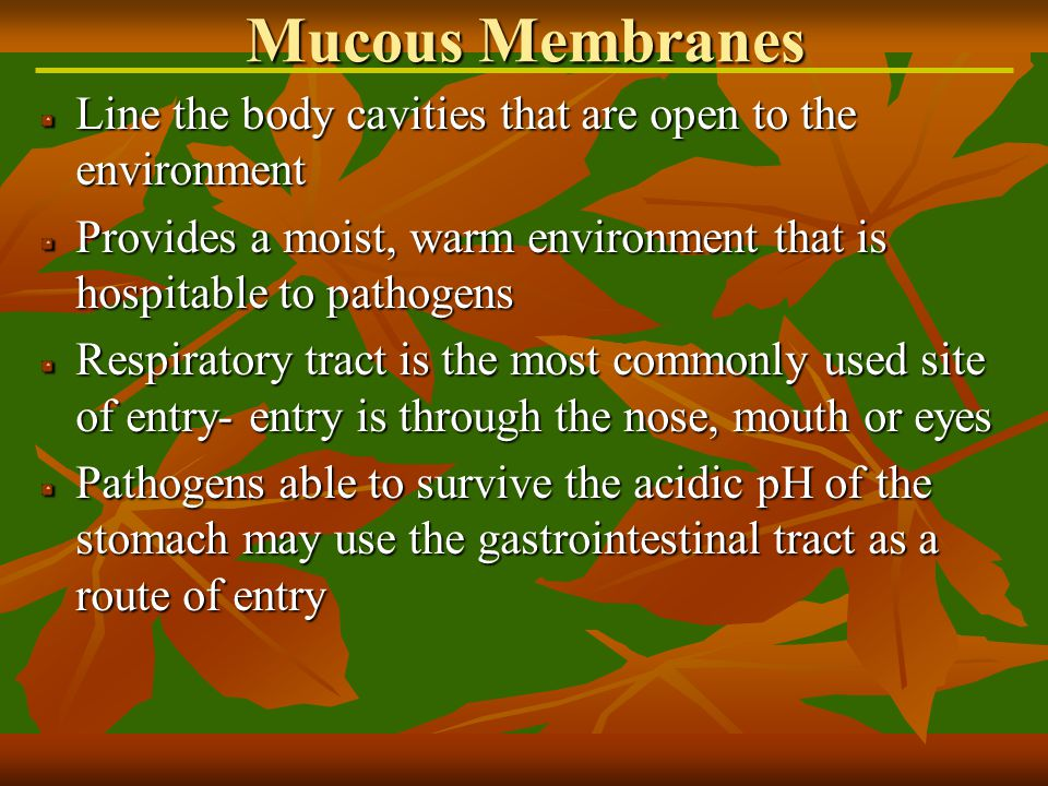 Line the body cavities that are open to the environment Provides a moist, warm environment that is hospitable to pathogens Respiratory tract is the most commonly used site of entry- entry is through the nose, mouth or eyes Pathogens able to survive the acidic pH of the stomach may use the gastrointestinal tract as a route of entry Mucous Membranes