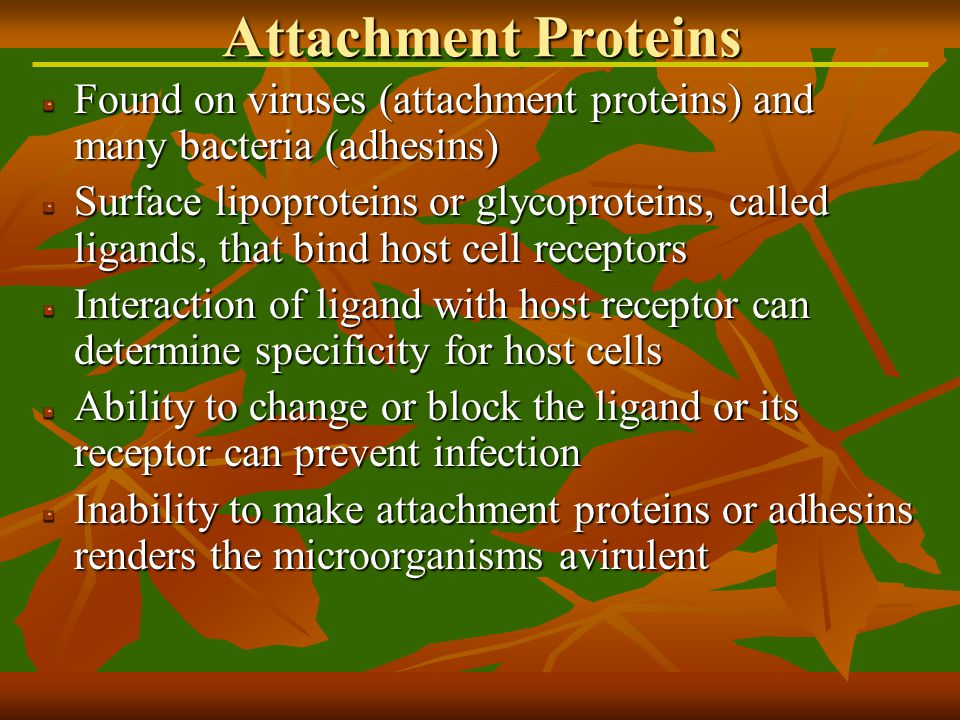 Found on viruses (attachment proteins) and many bacteria (adhesins) Surface lipoproteins or glycoproteins, called ligands, that bind host cell receptors Interaction of ligand with host receptor can determine specificity for host cells Ability to change or block the ligand or its receptor can prevent infection Inability to make attachment proteins or adhesins renders the microorganisms avirulent Attachment Proteins