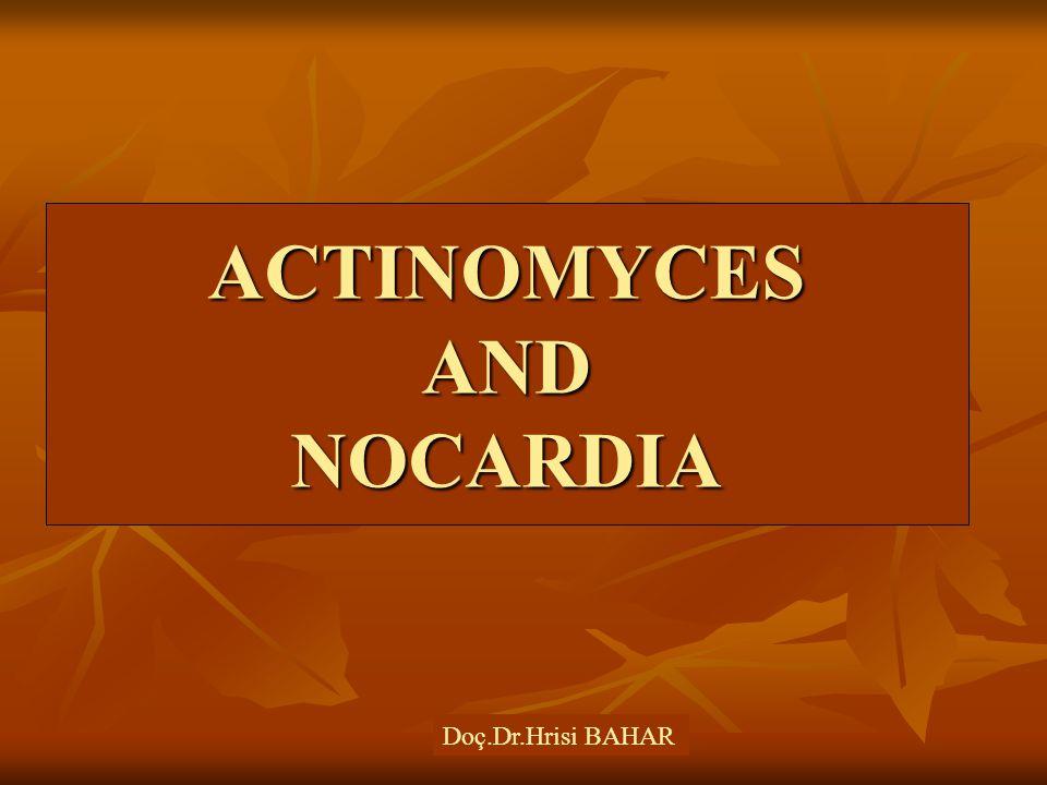 ACTINOMYCES AND NOCARDIA Doç.Dr.Hrisi BAHAR