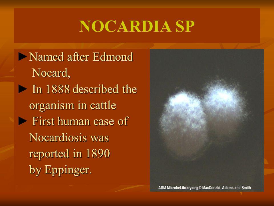 Named after Edmond ►Named after Edmond Nocard, Nocard, In 1888 described the ► In 1888 described the organism in cattle organism in cattle First human