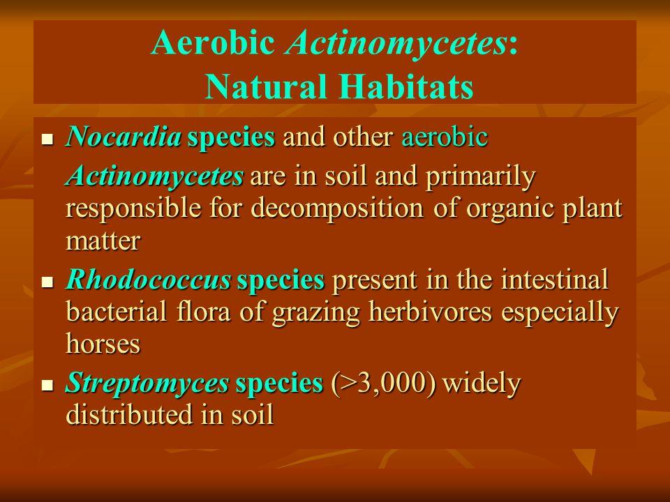 Aerobic Actinomycetes: Natural Habitats Nocardia species and other aerobic Nocardia species and other aerobic Actinomycetes are in soil and primarily