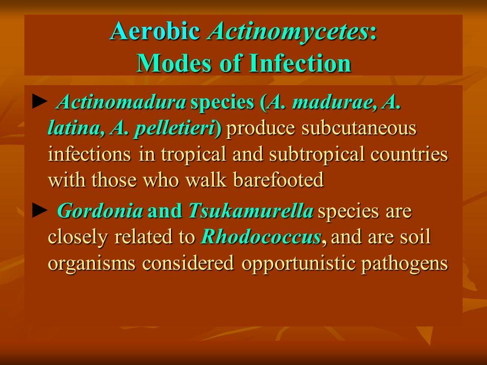 Aerobic Actinomycetes: Modes of Infection Actinomadura species (A.