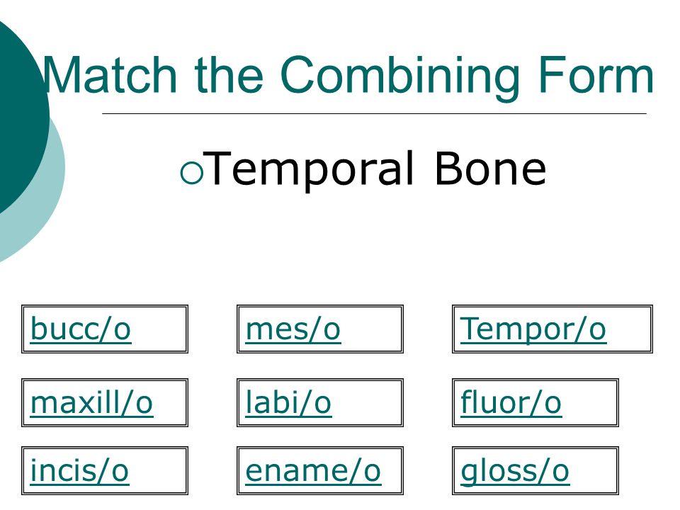 Match the Combining Form  Temporal Bone labi/o Tempor/o maxill/ofluor/o gloss/oincis/o bucc/omes/o ename/o