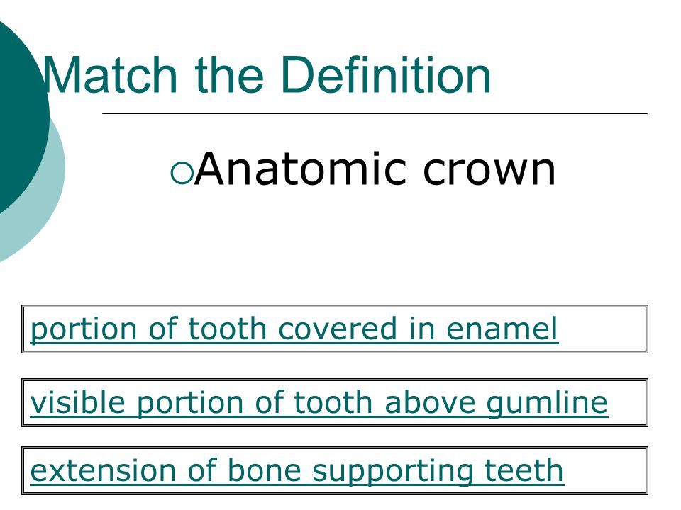 Match the Definition  Anatomic crown visible portion of tooth above gumline extension of bone supporting teeth portion of tooth covered in enamel