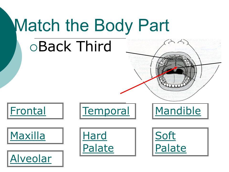 Match the Body Part  Back Third Hard Palate Mandible MaxillaSoft Palate Alveolar FrontalTemporal