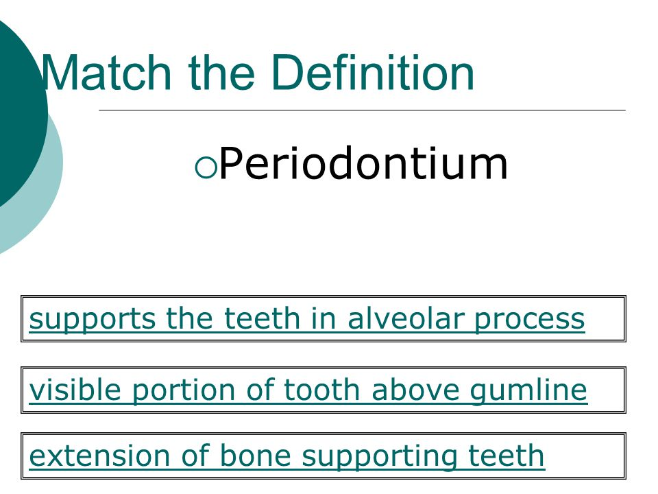 Match the Definition  Periodontium visible portion of tooth above gumline extension of bone supporting teeth supports the teeth in alveolar process