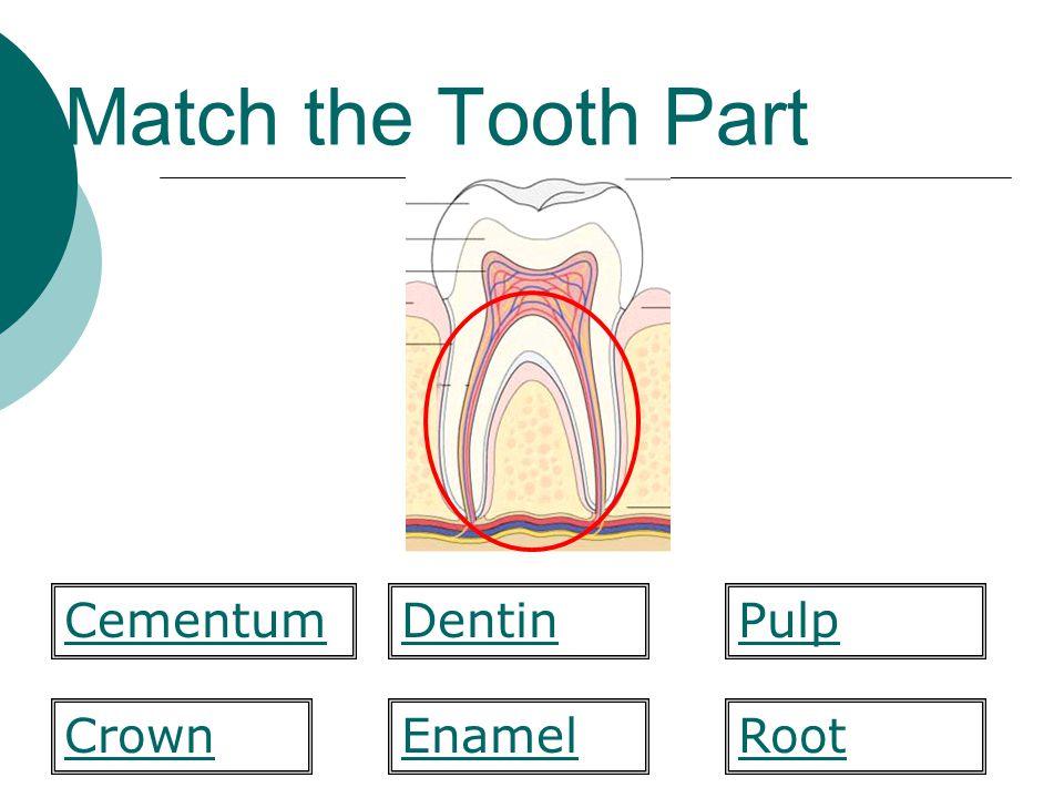 Match the Combining Form  Lip labi/o mandibul/a maxill/ofluor/o gloss/oincis/o bucc/omes/o ename/o