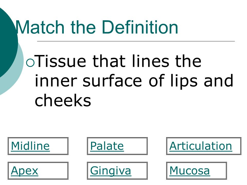 Match the Definition  Tissue that lines the inner surface of lips and cheeks PalateMidlineArticulation MucosaApexGingiva