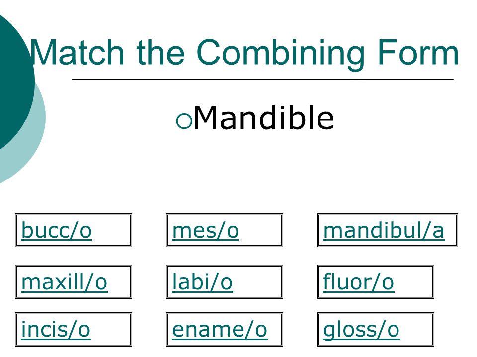Match the Combining Form  Mandible labi/o mandibul/a maxill/ofluor/o gloss/oincis/o bucc/omes/o ename/o