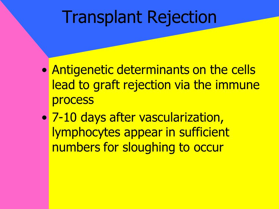Transplant Rejection Antigenetic determinants on the cells lead to graft rejection via the immune process 7-10 days after vascularization, lymphocytes appear in sufficient numbers for sloughing to occur