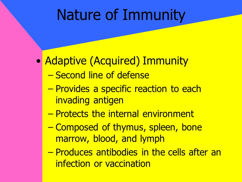 Nature of Immunity Adaptive (Acquired) Immunity –Second line of defense –Provides a specific reaction to each invading antigen –Protects the internal environment –Composed of thymus, spleen, bone marrow, blood, and lymph –Produces antibodies in the cells after an infection or vaccination