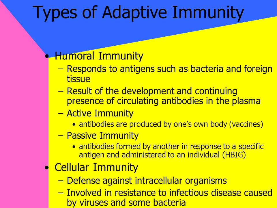 Types of Adaptive Immunity Humoral Immunity –Responds to antigens such as bacteria and foreign tissue –Result of the development and continuing presence of circulating antibodies in the plasma –Active Immunity antibodies are produced by one's own body (vaccines) –Passive Immunity antibodies formed by another in response to a specific antigen and administered to an individual (HBIG) Cellular Immunity –Defense against intracellular organisms –Involved in resistance to infectious disease caused by viruses and some bacteria
