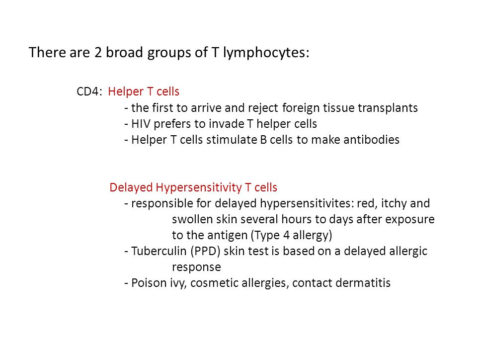 There are 2 broad groups of T lymphocytes: CD4: Helper T cells - the first to arrive and reject foreign tissue transplants - HIV prefers to invade T h