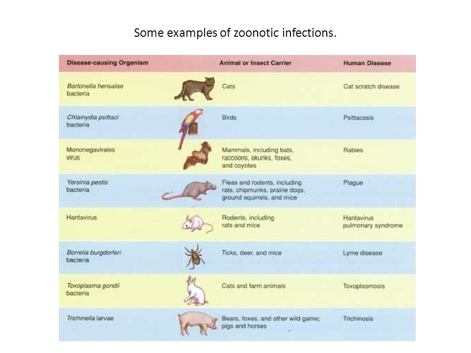 Some examples of zoonotic infections.