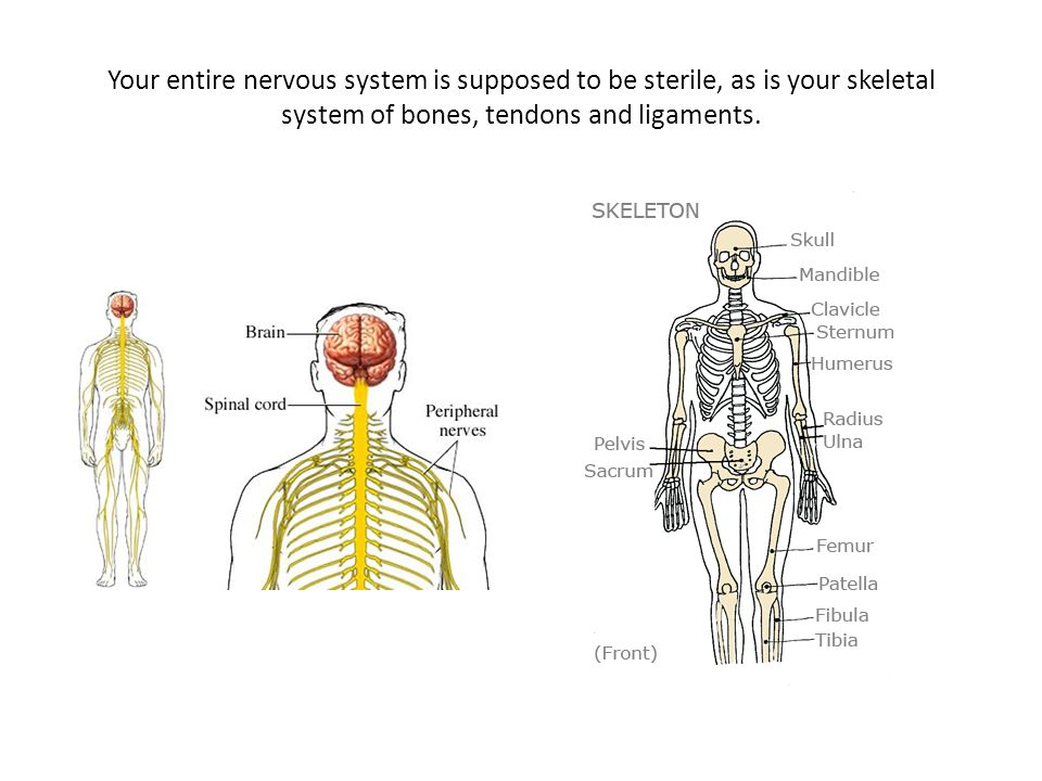 Your entire nervous system is supposed to be sterile, as is your skeletal system of bones, tendons and ligaments.