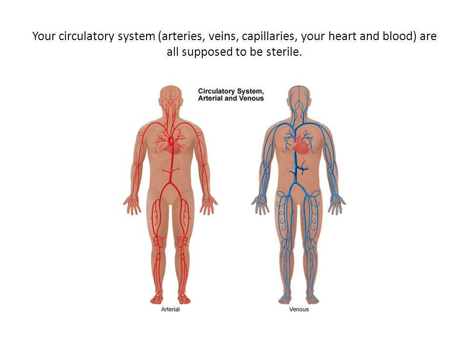 Your circulatory system (arteries, veins, capillaries, your heart and blood) are all supposed to be sterile.