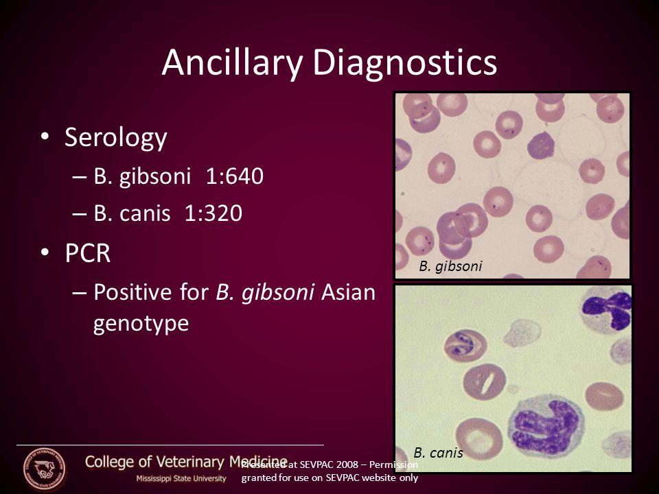 Ancillary Diagnostics Serology – B. gibsoni 1:640 – B.