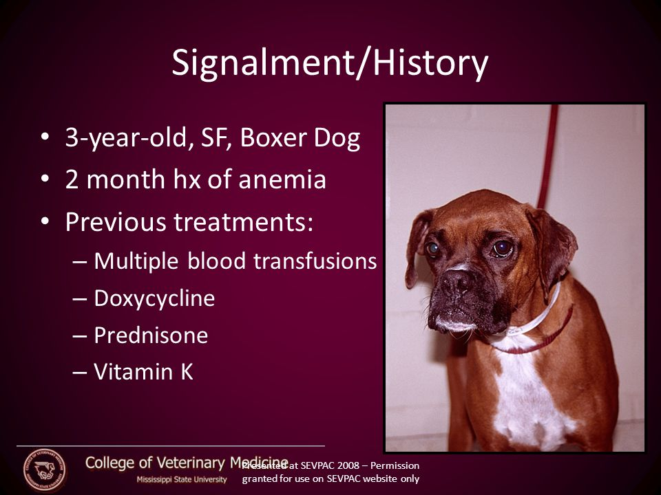 Canine Babesiosis American Dog tick Dermacentor Variabilis Hemoprotozoan Genus Babesia Ixodid tick vectors Small and large piroplasms Characterized by Hemolytic anemia Thrombocytopenia Fever Splenomegaly Presented at SEVPAC 2008 – Permission granted for use on SEVPAC website only