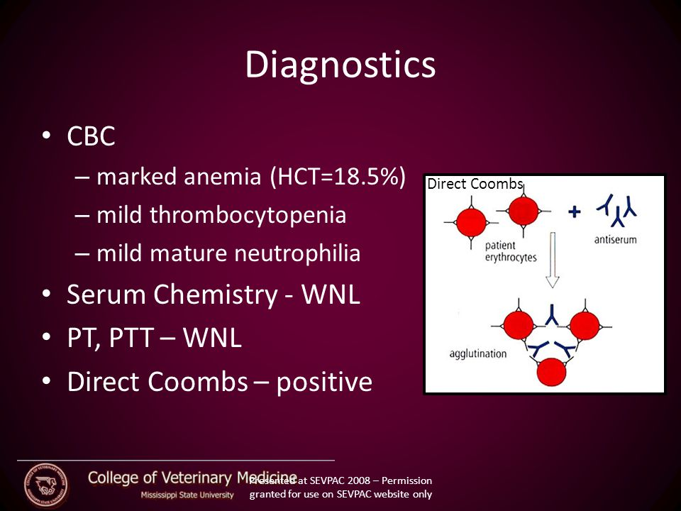 Diagnostics CBC – marked anemia (HCT=18.5%) – mild thrombocytopenia – mild mature neutrophilia Serum Chemistry - WNL PT, PTT – WNL Direct Coombs – positive Direct Coombs Presented at SEVPAC 2008 – Permission granted for use on SEVPAC website only