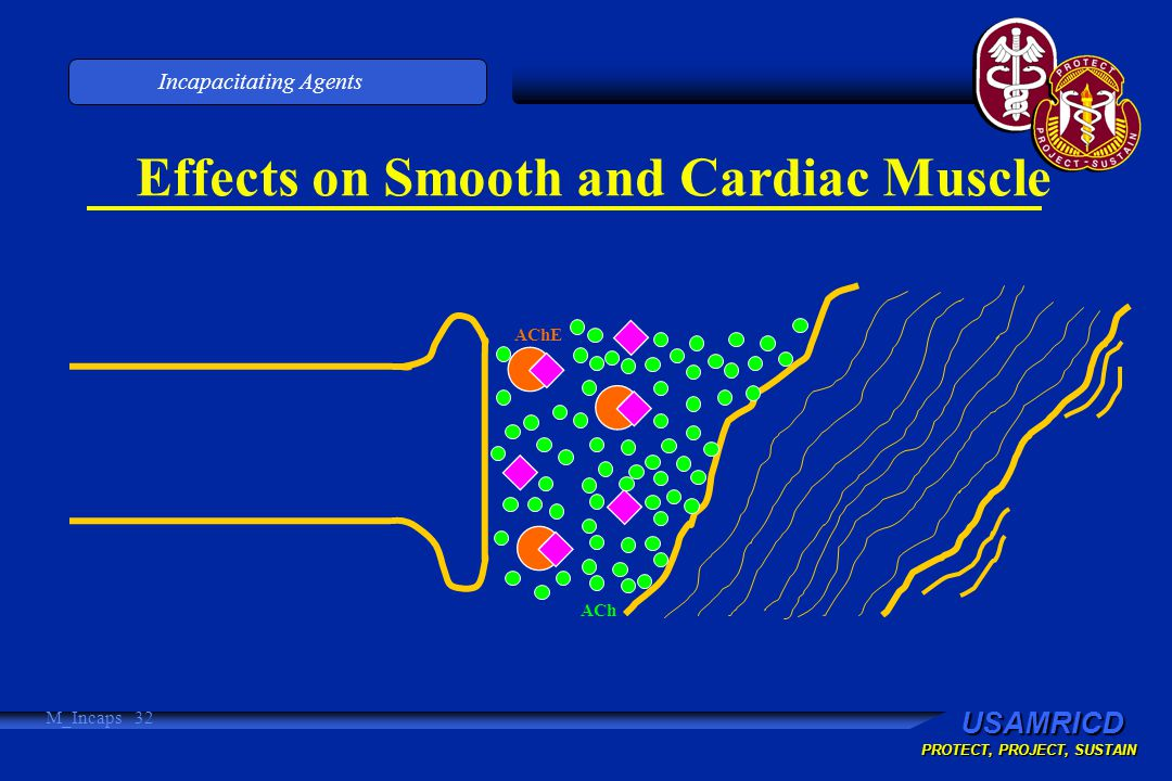 USAMRICD PROTECT, PROJECT, SUSTAIN Incapacitating Agents M_Incaps 32 Effects on Smooth and Cardiac Muscle ACh AChE