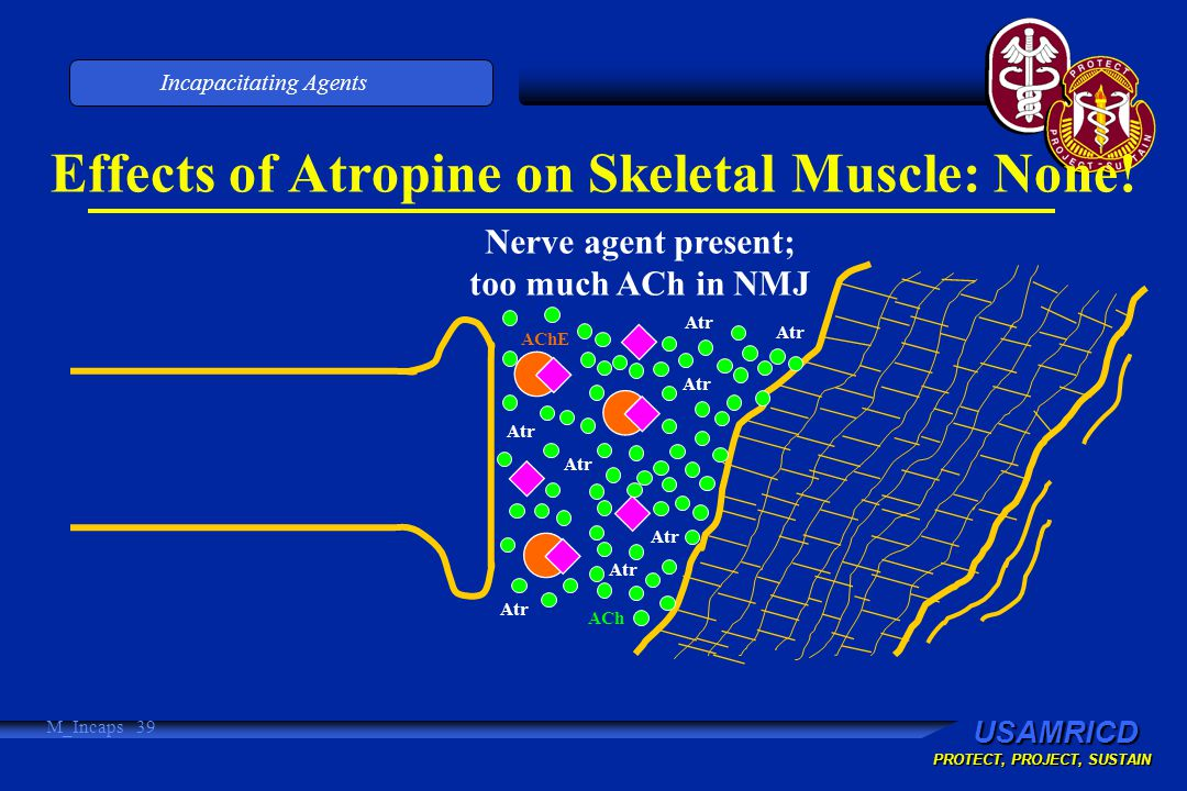 USAMRICD PROTECT, PROJECT, SUSTAIN Incapacitating Agents M_Incaps 39 Effects of Atropine on Skeletal Muscle: None.
