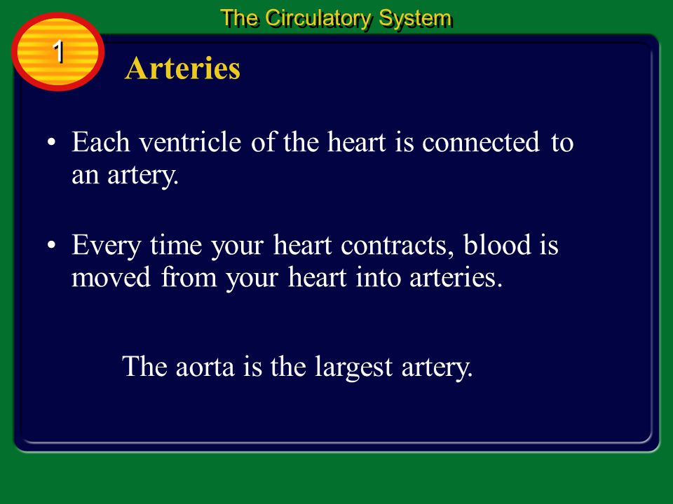 Arteries are blood vessels that carry blood away from the heart.
