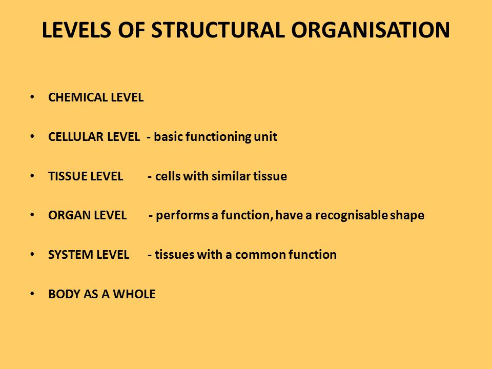 LEVELS OF STRUCTURAL ORGANISATION CHEMICAL LEVEL CELLULAR LEVEL - basic functioning unit TISSUE LEVEL - cells with similar tissue ORGAN LEVEL - perfor