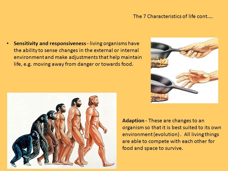 The 7 Characteristics of life cont.… Sensitivity and responsiveness - living organisms have the ability to sense changes in the external or internal e