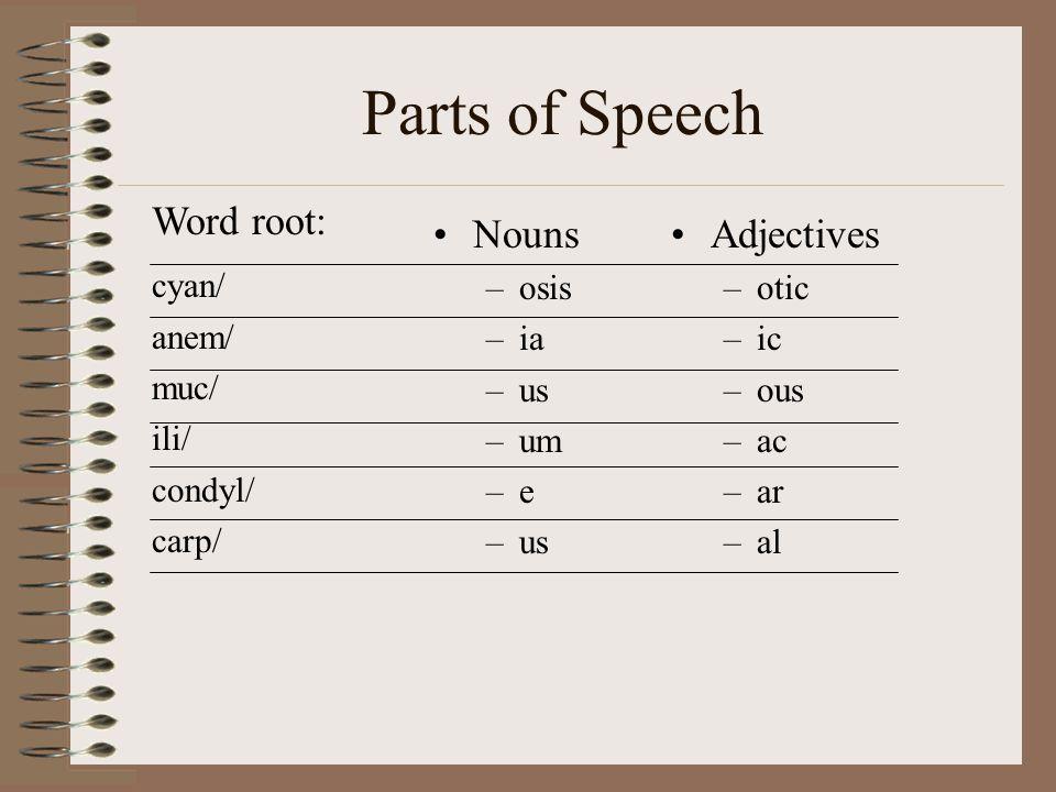 Parts of Speech Nouns –osis –ia –us –um –e –us Adjectives –otic –ic –ous –ac –ar –al Word root: cyan/ anem/ muc/ ili/ condyl/ carp/