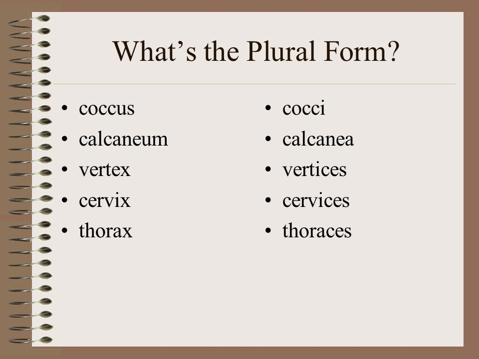 What's the Plural Form.