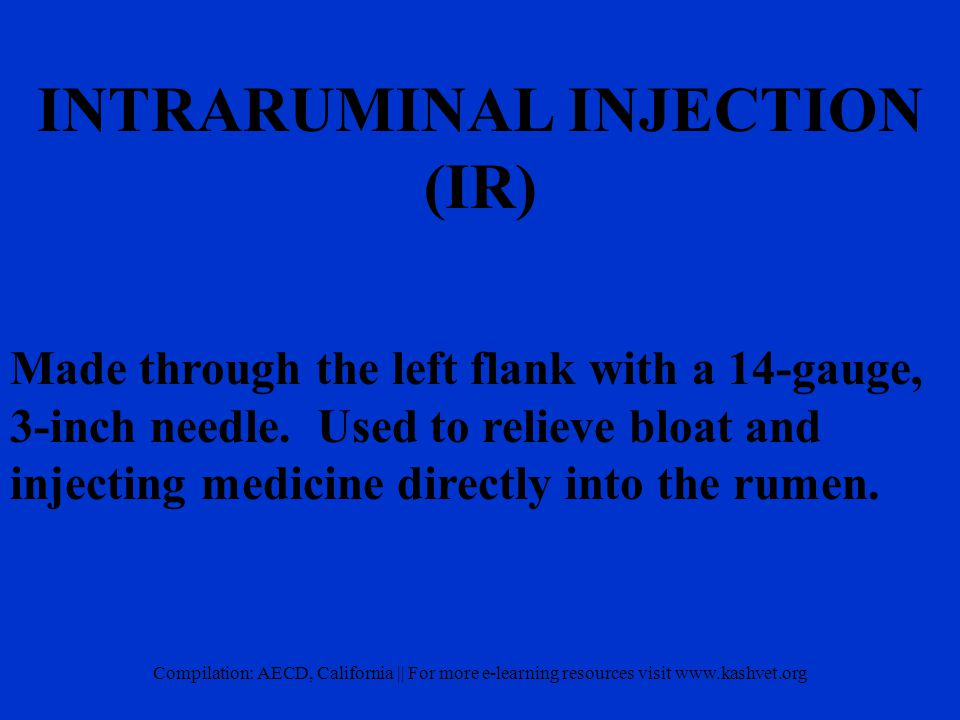 INTRARUMINAL INJECTION (IR) Made through the left flank with a 14-gauge, 3-inch needle.