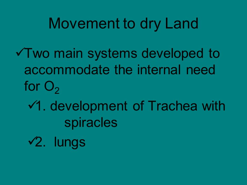 Movement to dry Land Two main systems developed to accommodate the internal need for O 2 1.