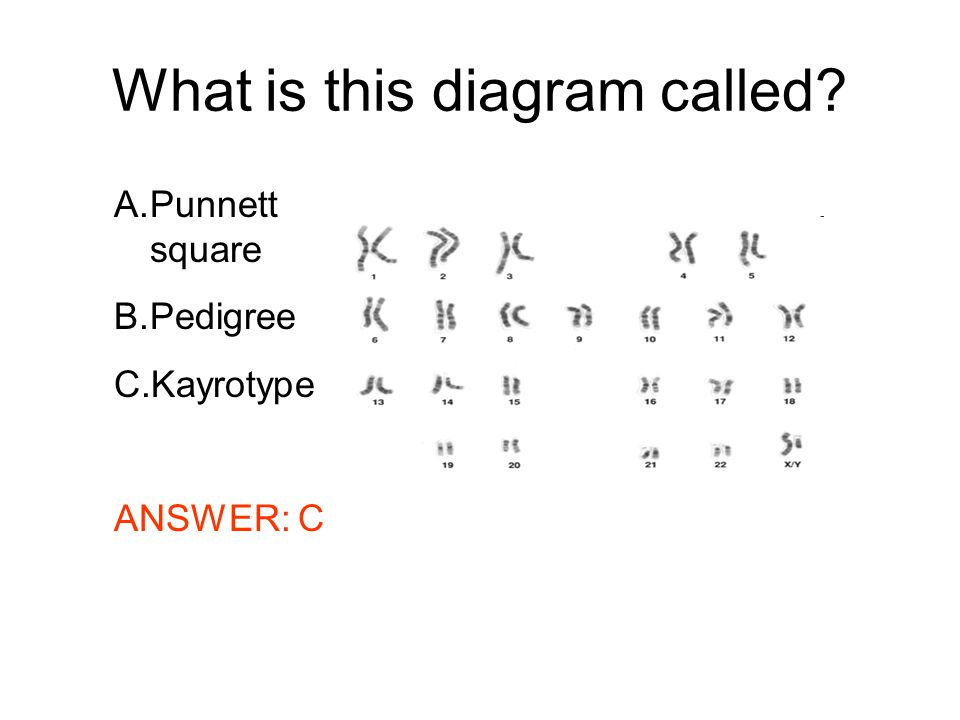 What is this diagram called? A.Punnett square B.Pedigree C.Kayrotype ANSWER: C