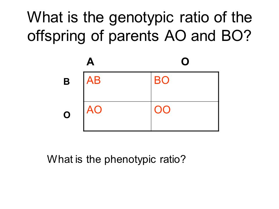 What is the genotypic ratio of the offspring of parents AO and BO? ABBO AOOO A O BOBO What is the phenotypic ratio?