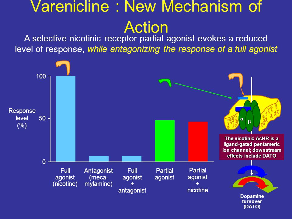 Varenicline : New Mechanism of Action 0 50 100 Response level (%) Full agonist (nicotine) Antagonist (meca- mylamine) Full agonist + antagonist Partial agonist + nicotine A selective nicotinic receptor partial agonist evokes a reduced level of response, while antagonizing the response of a full agonist The nicotinic AcHR is a ligand-gated pentameric ion channel; downstream effects include DATO Dopamine turnover (DATO)  