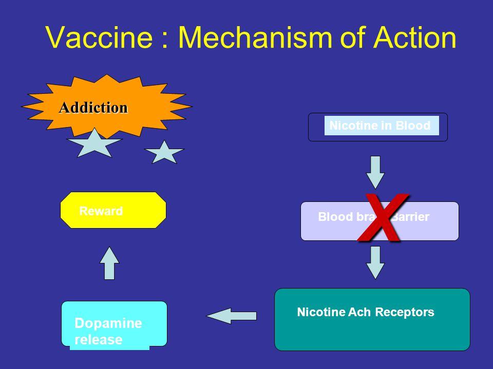 Nicotine in Blood Blood brain Barrier Nicotine Ach Receptors Dopamine release Addiction X Reward Vaccine : Mechanism of Action