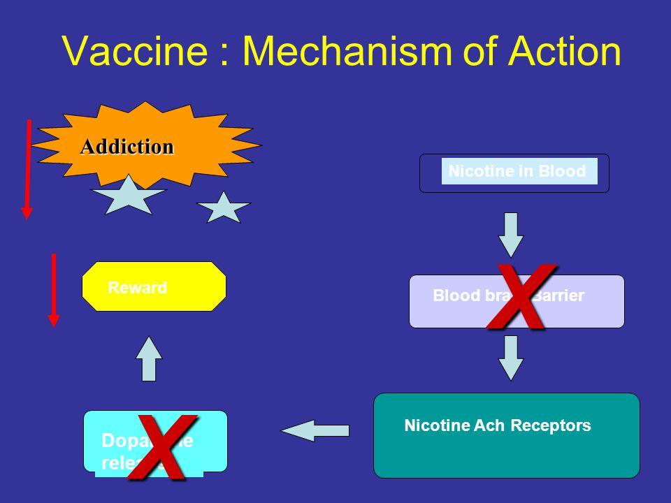 Nicotine in Blood Blood brain Barrier Nicotine Ach Receptors Dopamine release Addiction X Reward Vaccine : Mechanism of Action X
