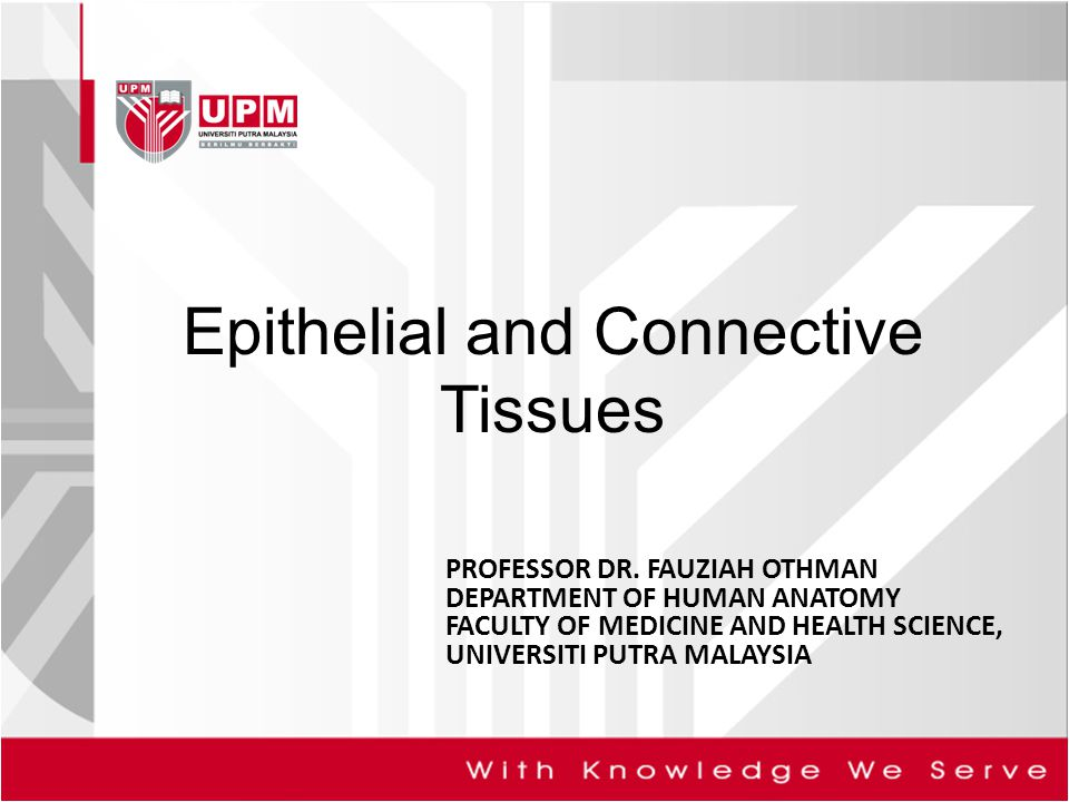 Epithelial tissues –Classes –Junctions –Glands Connective Tissues –Matrix –Cells –Types