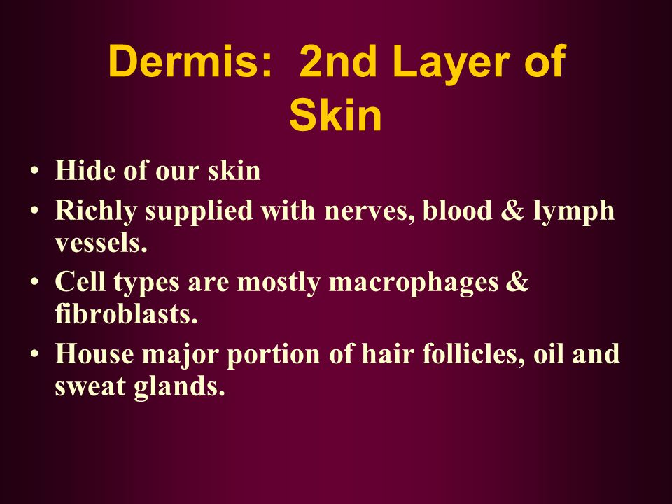 Dermis: 2nd Layer of Skin Hide of our skin Richly supplied with nerves, blood & lymph vessels. Cell types are mostly macrophages & fibroblasts. House