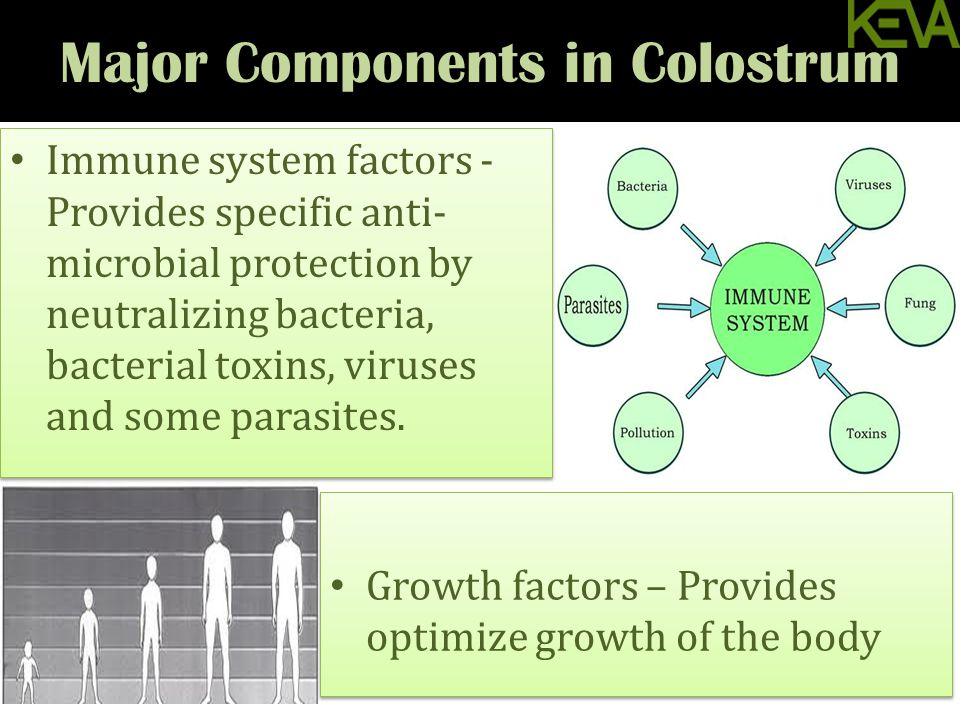Major Components in Colostrum Growth factors – Provides optimize growth of the body Immune system factors - Provides specific anti- microbial protection by neutralizing bacteria, bacterial toxins, viruses and some parasites.