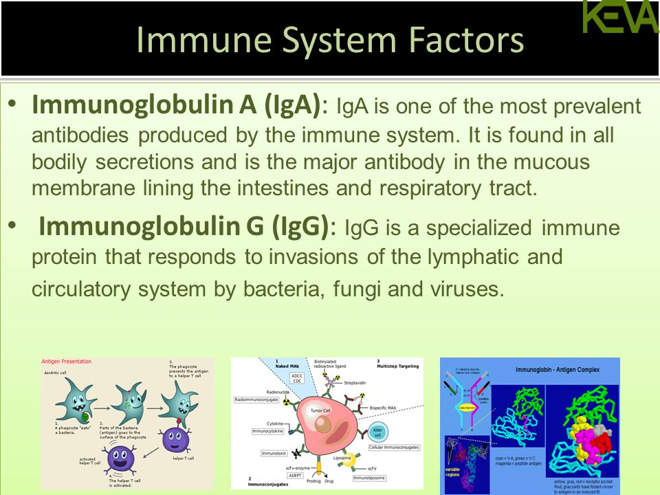 Immune System Factors Immunoglobulin A (IgA): IgA is one of the most prevalent antibodies produced by the immune system.