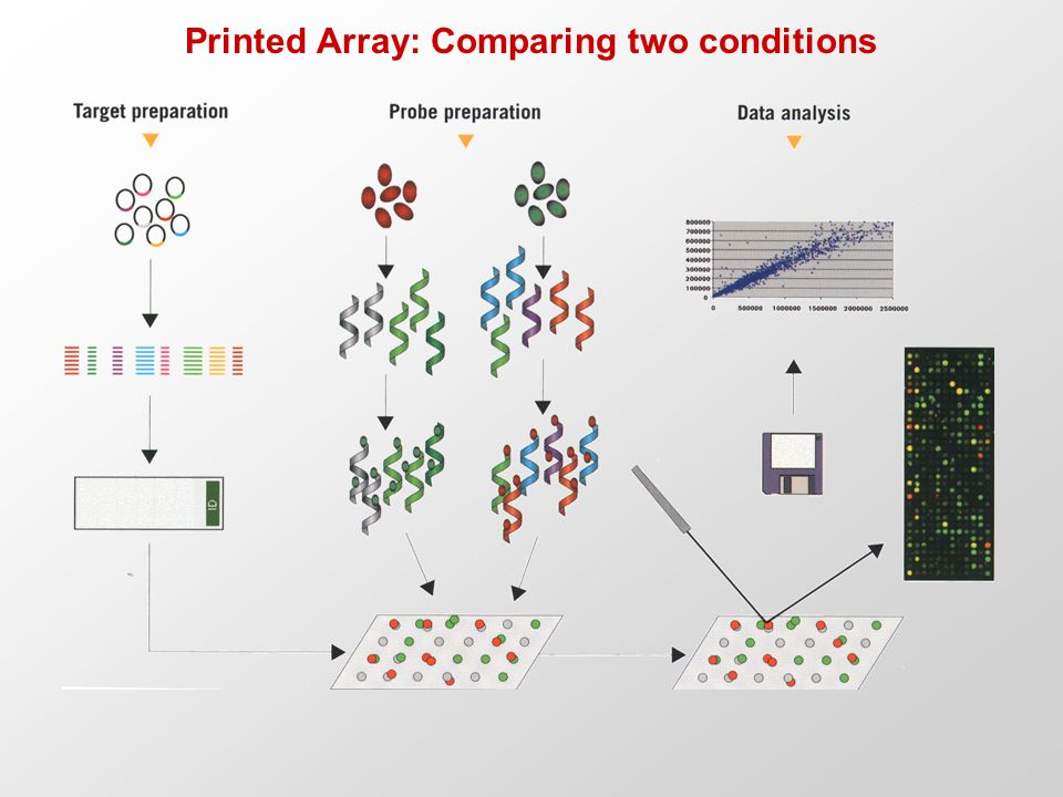 Printed Array: Comparing two conditions