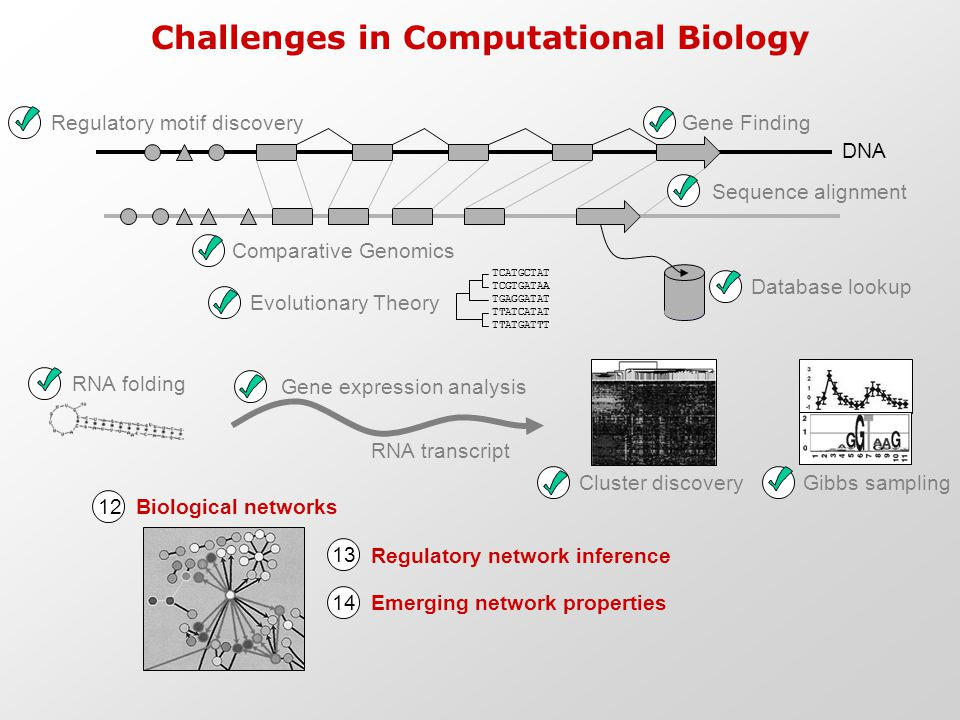 Challenges in Computational Biology DNA Gene FindingRegulatory motif discovery Database lookup Gene expression analysis RNA transcript Sequence alignm