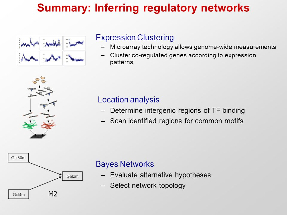 Summary: Inferring regulatory networks Expression Clustering –Microarray technology allows genome-wide measurements –Cluster co-regulated genes accord