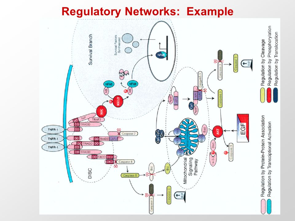 Regulatory Networks: Example