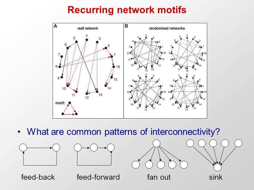 Recurring network motifs What are common patterns of interconnectivity.